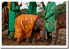 orphan-elephant-raincoat-615